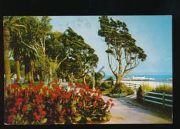 Santa Monica - Palisades Park [AA44 3.262 - Non Classificati