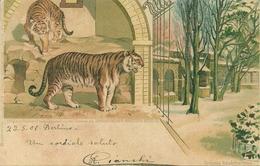 Tigri, Riproduzione Da Orig., Reproduction, Illustrazione, (E02) - Tigri