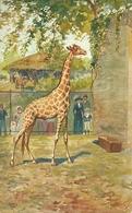 Giraffa, Riproduzione Da Orig., Reproduction, Illustrazione, V. Caponi Illustratore, (E05) - Giraffe