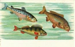 Pesci, Riproduzione Da Orig., Reproduction, Illustrazione, (E06) - Pesci E Crostacei