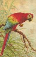 Pappagallo, Riproduzione Da Orig., Reproduction, Illustrazione, (E08) - Uccelli