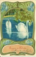 Cigni, Riproduzione Da Orig., Reproduction, Illustrazione, (E09) - Uccelli