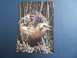 19972) UCCELLO TARABUSO NON VIAGGIATA - Uccelli