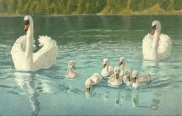 Cigni, Riproduzione Da Orig., Reproduction, Illustrazione, (E10) - Uccelli