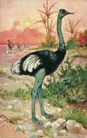 Struzzo, Riproduzione Da Orig., Reproduction, Illustrazione, (E11) - Uccelli