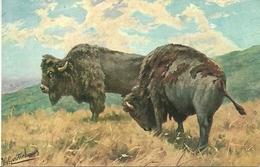 Bisonti, Riproduzione Da Orig., Reproduction, Illustrazione, (E12) - Tauri