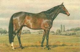 Cavallo Al Pascolo, Riproduzione Da Orig., Reproduction, Illustrazione, Alderson Illustratore (E15) - Cavalli