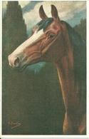 Cavallo, La Testa, Riproduzione Da Orig., Reproduction, Illustrazione, C. Burton Illustratore (E16) - Cavalli