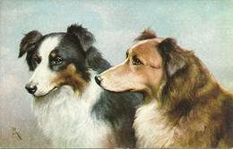 Cani, Chiens, Dogs, Hunde, Riproduzione Da Orig., Reproduction, Illustrazione, (E18) - Perros