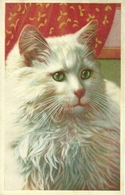 Gatto, Chat, Cat, Katze, Riproduzione Da Orig., Reproduction, (E26) - Gatti