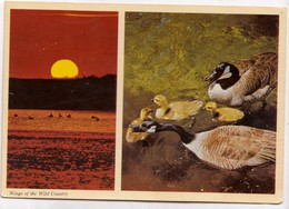 Wings Of The Wild Country, The Canada Goose, 1972 Used Postcard [23414] - Birds