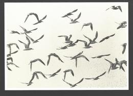 Sterne / Stern / Tern - Oiseaux