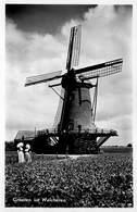 Windmolen Molen Windmill Moulin à Vent   Groeten Uit Walcheren Oostkappelle   Echte Fotokaart    L 553 - Windmolens