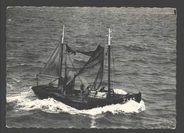 Zeebrugge - Terug Van Visvangst - Bateau De Pêche / Fishing Boat / Vissersboot - Zeebrugge