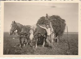 Soldats Allemands : Ramassant Du Foin - ( Attelelage ) - Cheval ( Format 8,5cm X 6cm ) - War, Military