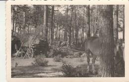 Cavalerie Allemande :  Cheval Dans Les Bois Avec Chariot - ( Format 10,3cm X 7cm ) - - War, Military