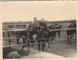 Cavalerie Allemande :  Chevaux Et Soldats - ( Format 11,7cm X 9cm ) - - War, Military