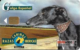 CARTE-PUCE-ESPAGNE-2000Pts-12/02-GEM-CHIEN RAZAS-GALGO ESPAGNOL-TBE - Chiens