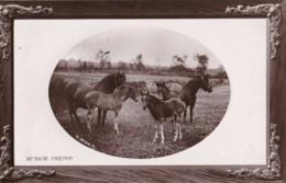 AR59 Animals - Meadow Friends - Horses, Oval Framed RPPC - Caballos