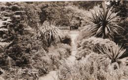 AS81 RPPC - The Rock Garden, The Grange - Photographs