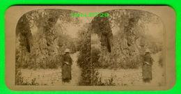 CARTES  STÉRÉOSCOPIQUES - GETHSEMANIE - MOINE DANS LE JARDIN DES OLIVIERS - - Stereoskopie