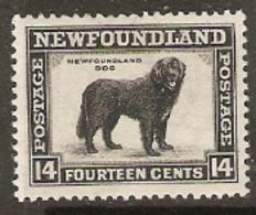 Newfoundland  1932  SG 216  Newfoundland Dog  Mounted  Mint - Newfoundland