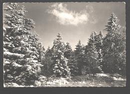 Hiver En Hautes-Fagnes - Aux Environs De Botrange - Waimes - Weismes