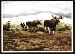 Elche Auf Der Kurische Nehrung  -  Deutsche Jägerschaft  - Jagdmuseum München - Gemälde-Ansichtskarte Ca. 1940 (11583) - Malerei & Gemälde
