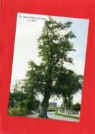 * * SAINT NICOLAS DE LA HAIE * * Le Chêne, Arbre Bicentenaire, Aout 1996 - France