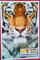 Zoo Boise Tiger - Boise
