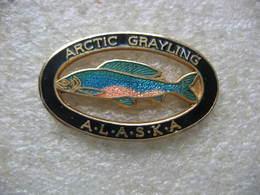 Pin's D'un Poisson De Belles Couleurs: Arctic Grayling En ALASKA - Animaux