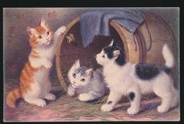 KATTEN CAT CATS CHAT  KITTEN - Chats