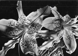 ORCHIDEE - VIAGGIATA 1957 - Fiori