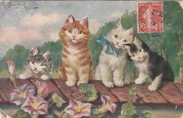 Lot 4 CPA  CHATS    Illustrateur     état Moyen - Cats