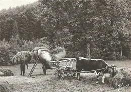 (LES VIEUX METIERS  )( AGRICULTURE )( LES FOINS )( ATTELAGE ) ( 88 VOSGES ) - Landwirtschaftl. Anbau