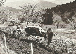 (LES VIEUX METIERS  )( AGRICULTURE )( LE LABOUR  )( ATTELAGE ) ( 88 VOSGES ) - Landwirtschaftl. Anbau