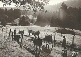 (LES VIEUX METIERS  )( AGRICULTURE  ) ( 88 VOSGES ) LES VACHES AU  PARC - Bauernhöfe