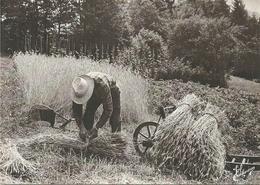 (LES VIEUX METIERS  )(AGRICULTURE  ) ( 88 VOSGES )( LE MOISSONNEUR) - Landwirtschaftl. Anbau