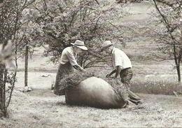 (LES VIEUX METIERS  )( AGRICULTURE )( LE LIEN ) ( 88 VOSGES ) - Bauernhöfe