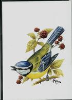 Carte Blanco: Mésange Bleue  -  Pimpelmees - 1985-.. Pájaros (Buzin)
