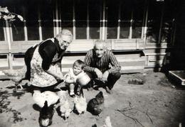 Photo Originale De Famille : Papy - Mamy - Le Petit Et Le Cul Des Poules à La Basse-Cour Vers 1960 - Anonymous Persons