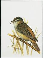 Carte Blanco : Phragmite Des Joncs  -  Rietzanger - 1985-.. Pájaros (Buzin)