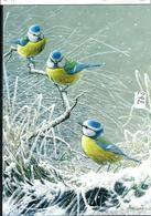 Carte Blanco : Les Petites Bleues - 1985-.. Pájaros (Buzin)