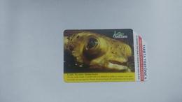 Cuba-pes Erizo Diodon Hystrix-urmet-(5.00pesos)-used Card+1card Prepiad Free - Cuba