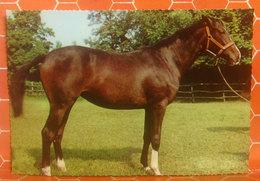 Cavallo Horse CARTOLINA Non Viaggiata - Cavalli
