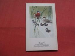Ruddy Duck      >  Ref    3556 - Birds