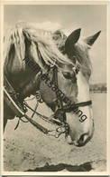 Pferd - Foto-AK - Paarden