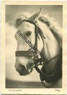 Pferd - Schimmel Hü - Foto-AK Grossformat - Popp-Verlag Heidelberg - Paarden