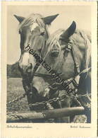 Pferde - Arbeitskameraden - Foto-AK Grossformat Herbert Bechmann - Walter Flechsig Verlag Dresden - Paarden