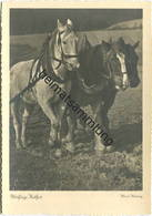 Pferde - Fleißige Helfer - Foto-AK Grossformat Hans Heinig - Walter Flechsig Verlag Dresden - Paarden